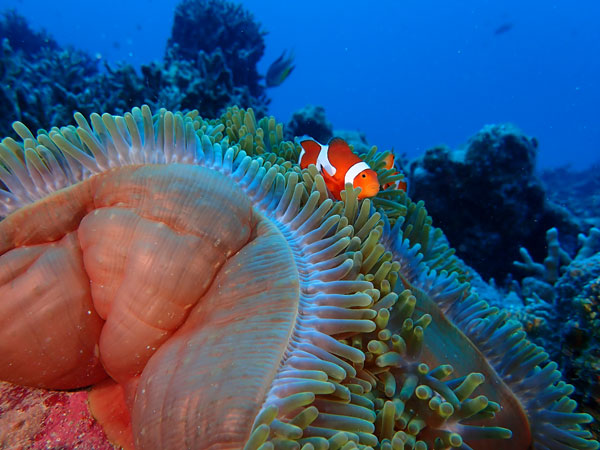 Olympus TOUGH TG-6: Underwater Wide: Image Courtesy of Olympus