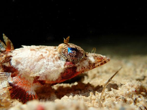 Olympus TOUGH TG-6: Underwater Microscope: Image Courtesy of Olympus