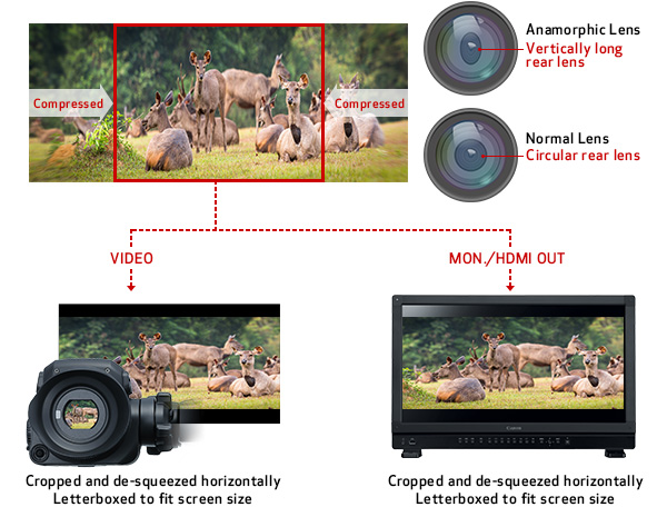 Canon EOS C500 Mark II: Users can now achieve wide cinematic looks and oval bokeh particular to anamorphic glass: Images Courtesy of Canon