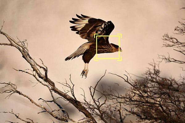 Nikon: Improved Focus Tracking Operation: Image Courtesy of Nikon