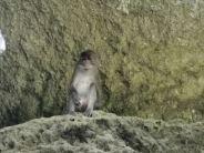野生のサルを見つけました。 Panak島(パナク島) / シーカヌー1日ツアー(デラックス)の紹介(その1)
