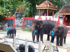 phuket_zoo_8516 (2)