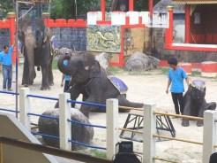 phuket_zoo_8516 (3)
