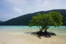 スリン島ツアー 2020-2021年度のご案内&受付開始 (10月15日より催行スタート)