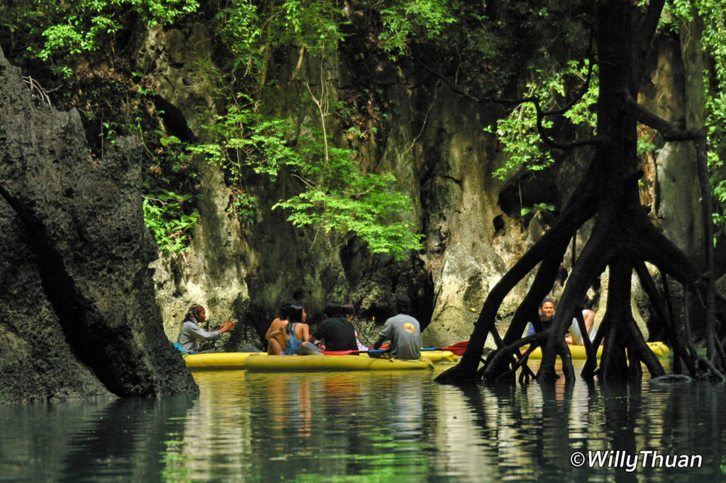The mangrove of Phang Nga by Sea Canoe