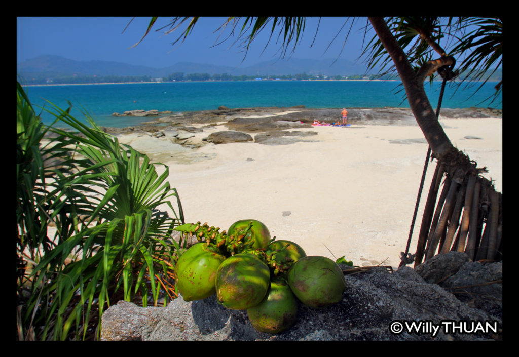 coconuts-bon-island