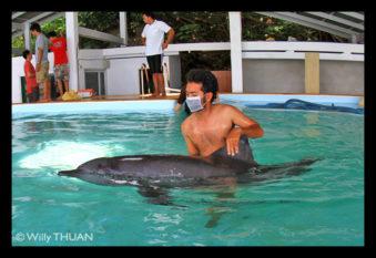 dolphin-rescue-phuket3