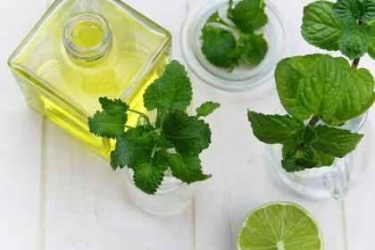 thai herbs,สมุนไพรไทย