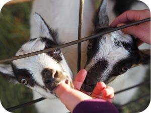 patty's goat farm