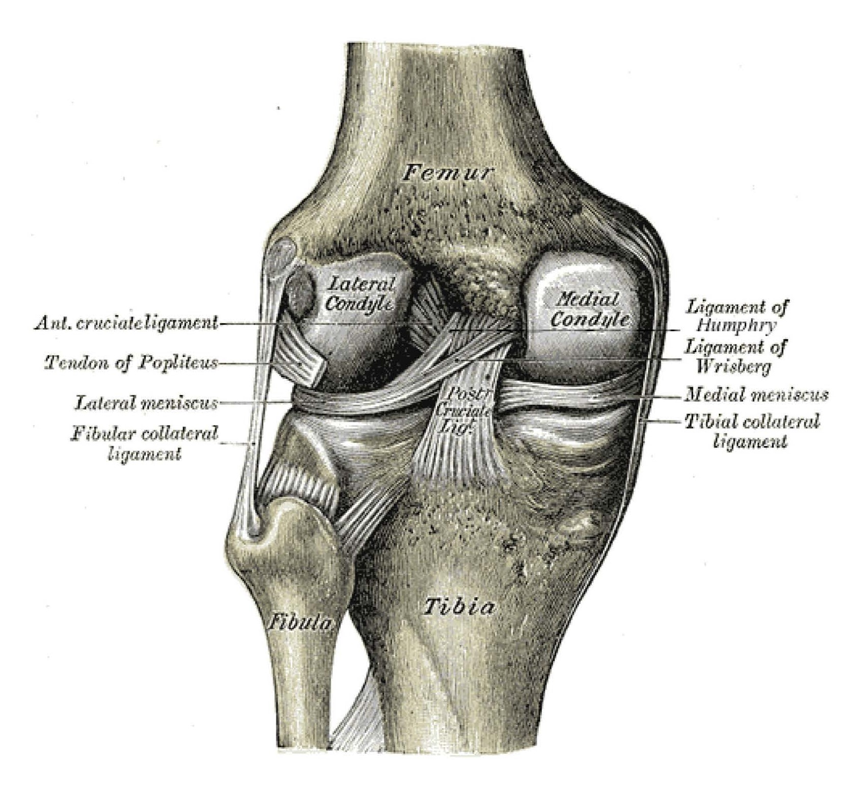 Medial Collateral Ligament Injury Of The Knee