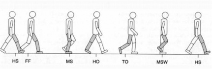 Diagram representation of heel strike locomotion