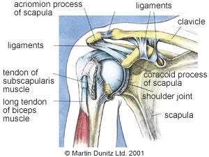 Anatomy of frozen shoulder injury