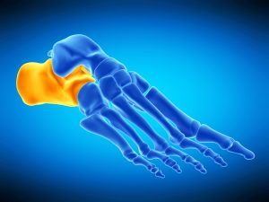 3d rendered, medically accurate illustration of the calcaneus bone