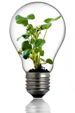 Innover dans le monde des végétaux