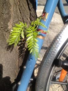 Die Blätter sind grün, weil sie von den vielen Farben des weißen Lichts die rote absorbieren. Der Rest wird reflektiert und erscheint in seiner Mischung grün. Das Fahrrad ist blau, weil es die gelb absorbiert.