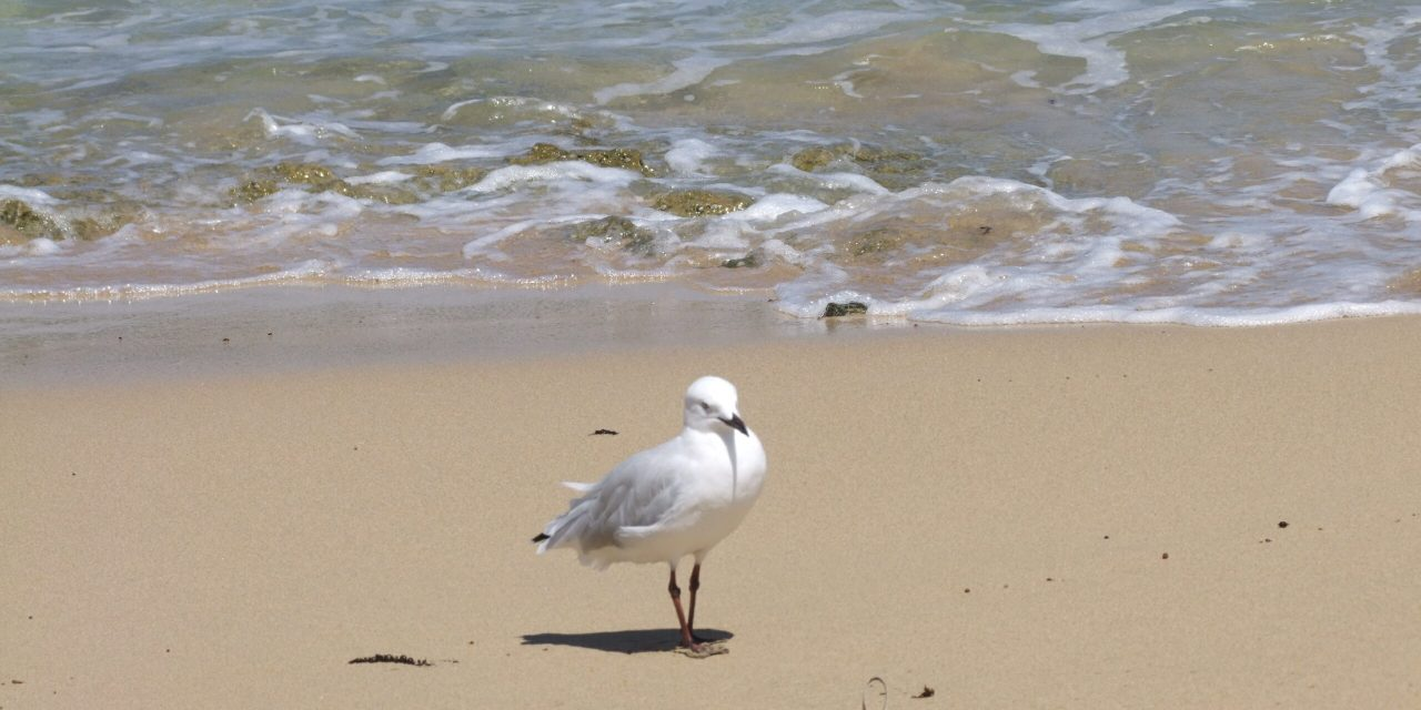 Meer (Gezeiten, Anomalie des Wassers, Strömungen)