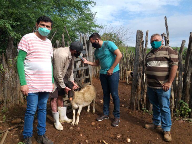 Teste na Regi%C3%A3o de Paulistana 9 Produtores do Território do Vale Itaim testam aplicativo para monitorar ovinos