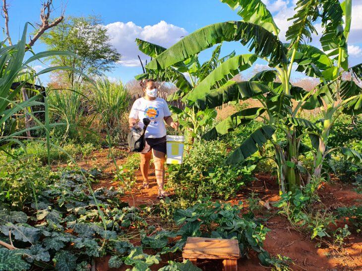 quintais agroecologicos 2 SAF inicia implantação de Quintais Agroecológicos em municípios do estado