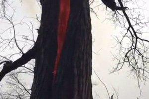 devil-tree