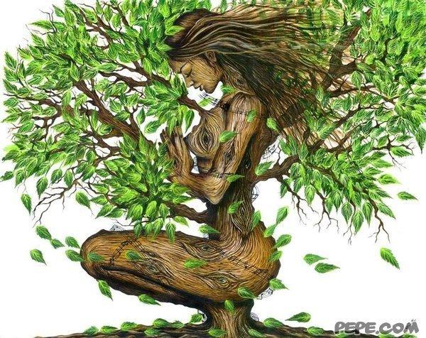 Il giorno del tuo compleanno ti dice che albero sei. Trova il tuo