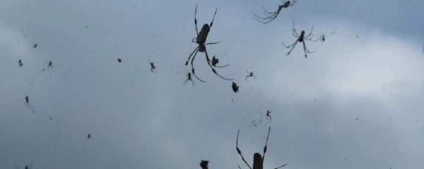 Incredibile scoperta: i ragni usano i campi elettrici per volare