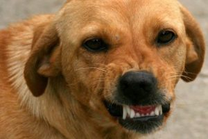 La scienza conferma che i cani sono capaci di riconoscere una persona cattiva: ecco come fanno
