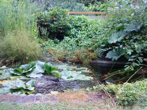 The pond at the well-kept garden