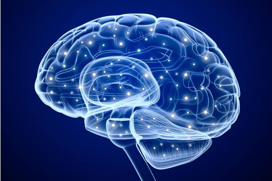 L'ultima frontiera della neuroscienza : il cervello umano digitale
