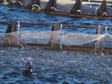 Ingrid Muccitelli nuota felice tra 250mila orate