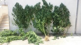foto-piante
