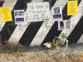 Cani uccisi a Gallipoli - Il ricordo dei volontari (4)