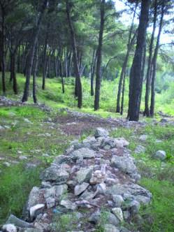 La pineta (2)