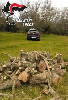 La legna sequestrata