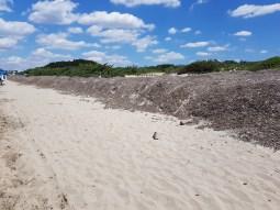 dune di alghe, spiaggia libera Baia verde