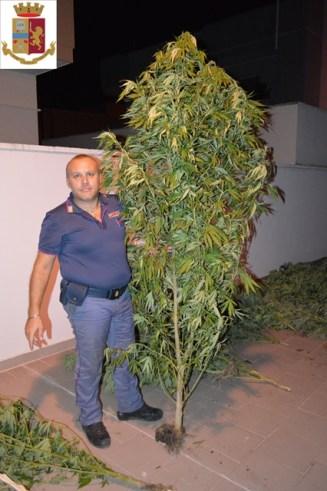 Aradeo, la coltivazione di marijuana