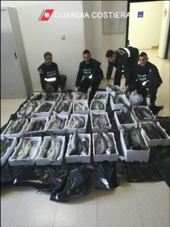 Guardia costiera, sequestro pesce a Uggiano la Chiesa (2)