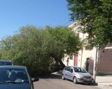 Piazza Umberto I, Casarano, albero caduto