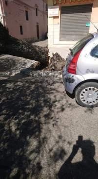 Piazza Umberto I, Casarano, l'albero caduto