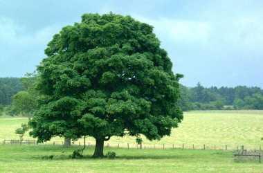 Foto:albero