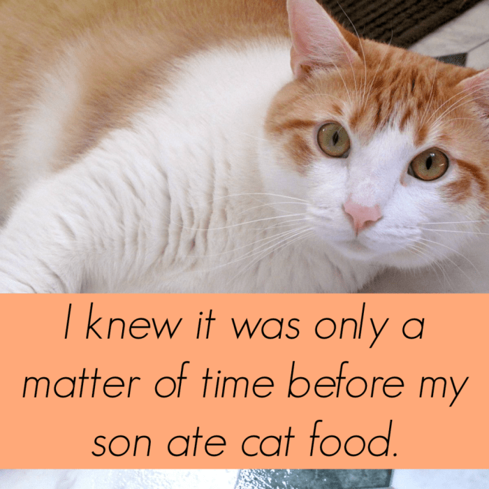My Son Ate Cat Food