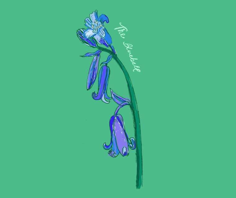 Pickle Design's illustration of a Bluebell for British Flowers Week