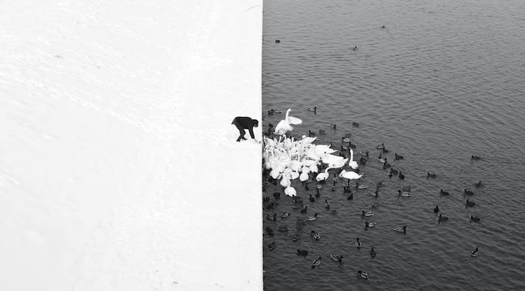 Siena International Photography Awards monochrome picture of man feeding birds in the snow
