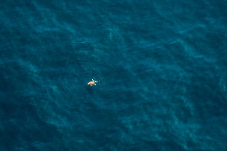 South Africa from above, turtle in the sea