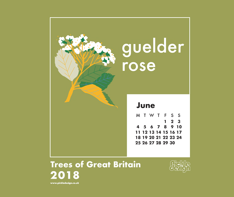 You can download our June calendar illustration of the Silver Birch tree for your desktop, mobile or tablet