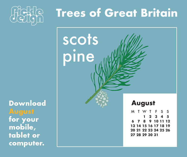 Download the free August retro illustrated calendar of the Scots Pine, one of our Great British trees for your desktop, mobile or tablet