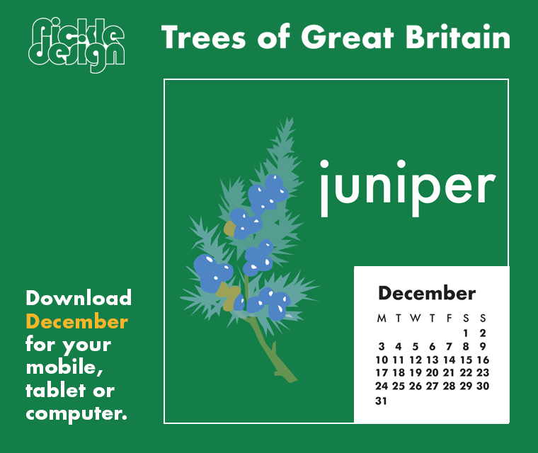 Download the free December retro illustrated calendar of the Juniper tree, one of our Great British trees for your desktop, mobile or tablet