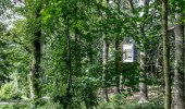 Nestled in the trees minimalist holiday cabin
