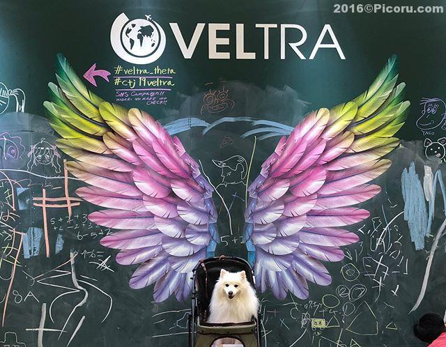 ぴったり^_^#veltra_theta #ctj19veltra