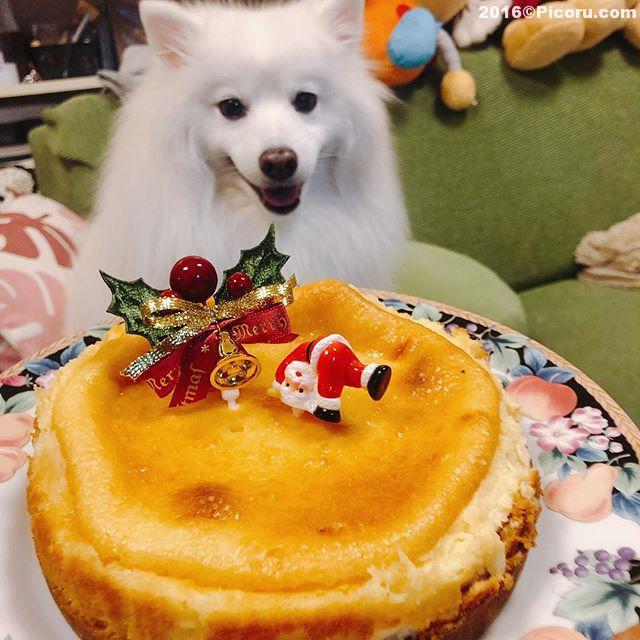 手作りチーズケーキ美味かった!