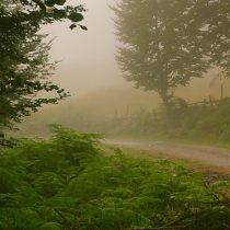 bosque-de-peloño